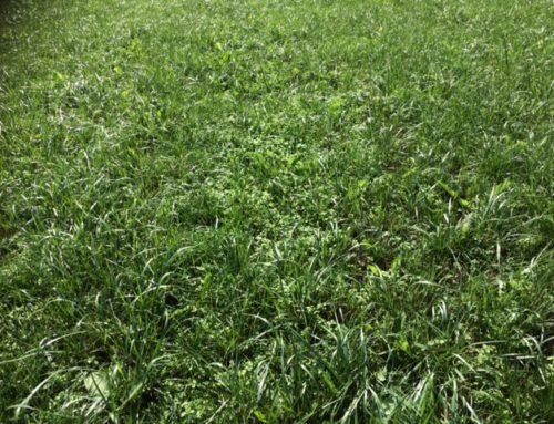 Groene Weide Meststof getest op De Marke