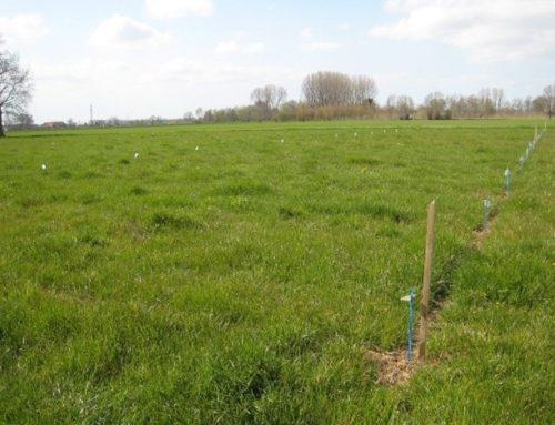Veldproeven Groene Weide Meststof in Wageningen